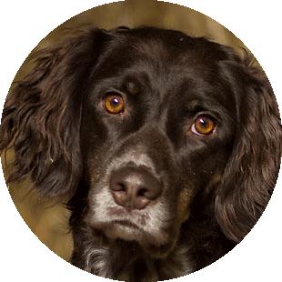 Hund Fred vom Islandpferdehof Bellershof